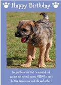 "Border Terrier-Happy Birthday - ""I'm Adopted"" Theme"